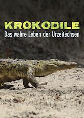 Search netflix Crocodiles – The Private Life of Primeaval Reptiles