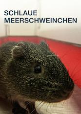 Search netflix The Secret Lives of Guinea Pigs
