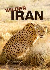 Search netflix Wilder Iran
