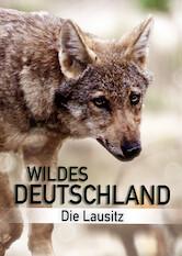 Search netflix Wild Germany – Exploring Lusatia