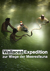 Search netflix Expedition Wallacea – The Cradle of Marine Life